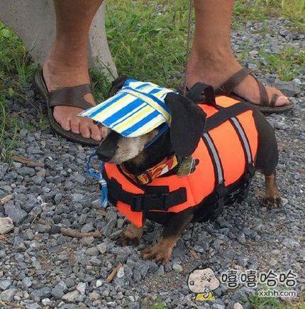 一网友带她家汪去划船,还贴心地给它做了救生衣和小遮阳帽,装备不如狗