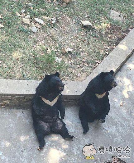 熊:你看我学葛大爷学的像不