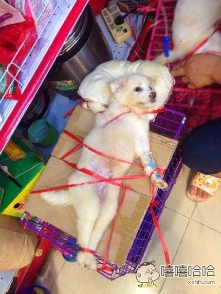 网友拍到这只打吊针的狗狗,此汪一脸生无可恋。。。