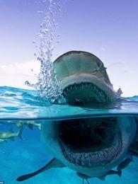 深夜谈鲨鱼